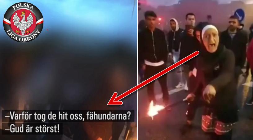 Szwecja. Jeśli nie chcecie islamu, dlaczego przywieźliście nas tutaj, bezpańskie psy?